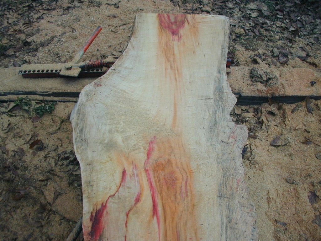 box elder slab