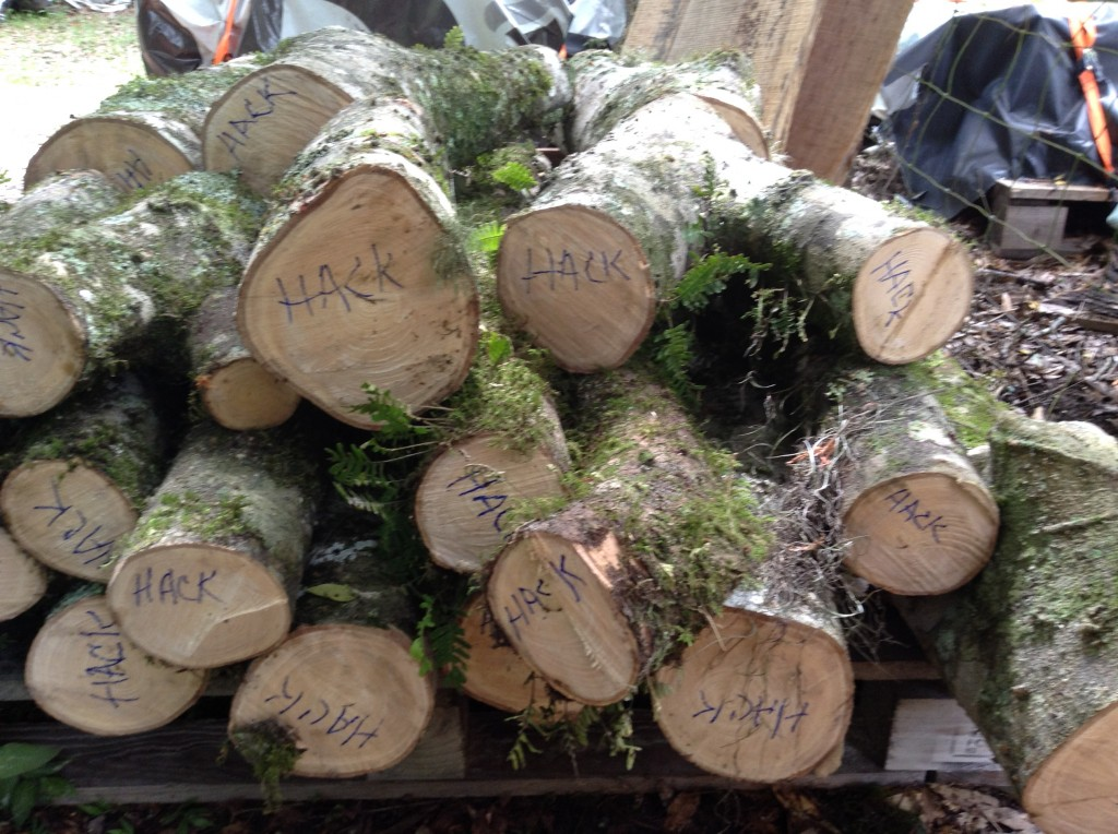 Small Hackberry Logs