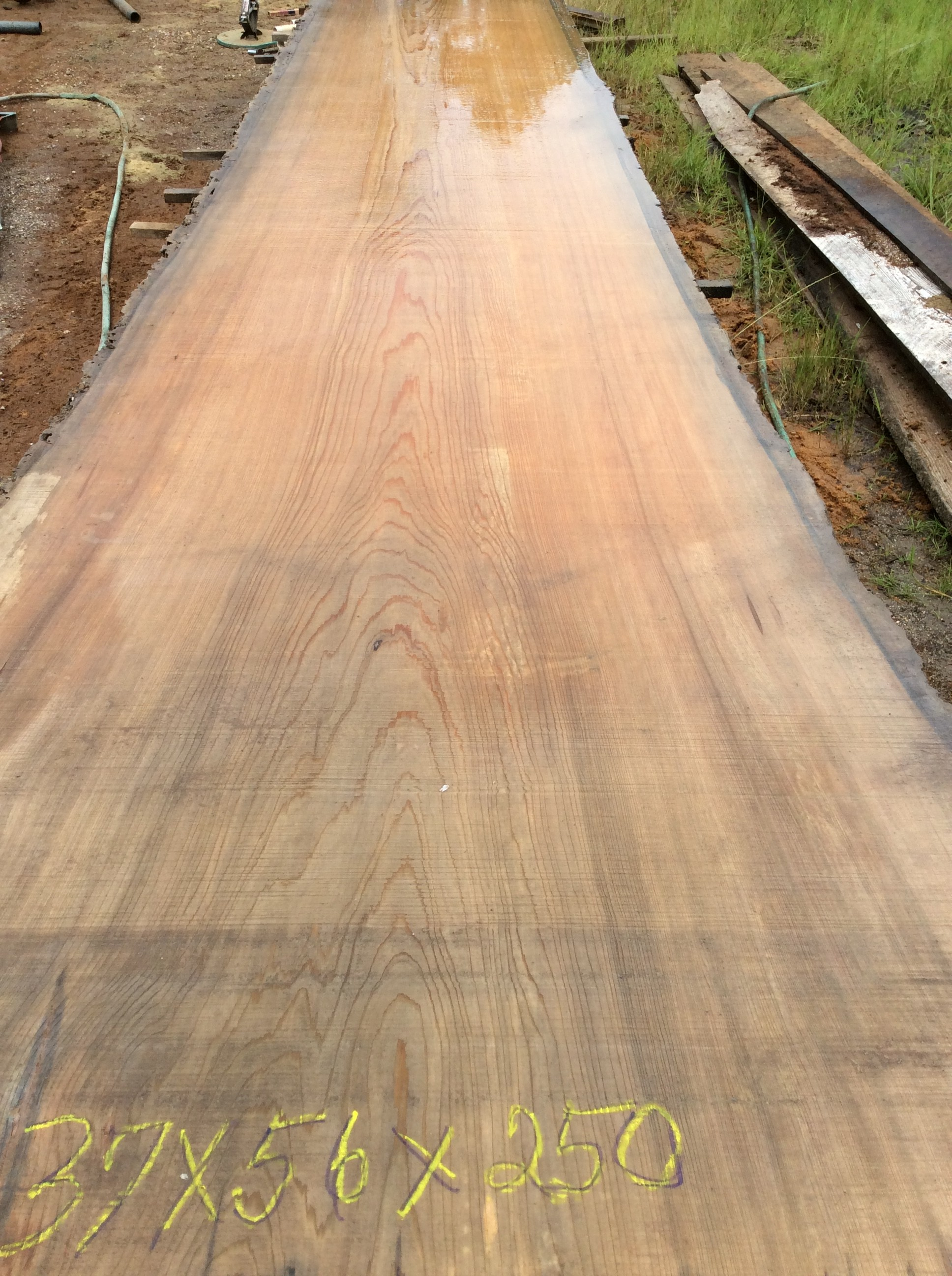Old Growth River Recovered Cypress Slabs Florida Crotchwood