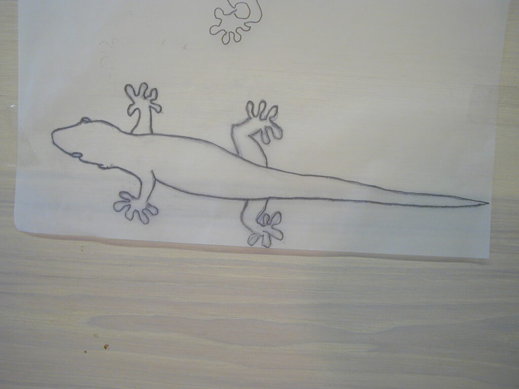 Lizard on tracing paper